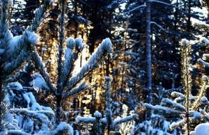 Новый год 2017 в Нижегородской области